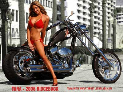 Big Dog Motorcycle Cover